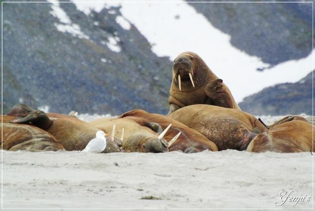 DSC_3297.JPG - 2019北極旅遊