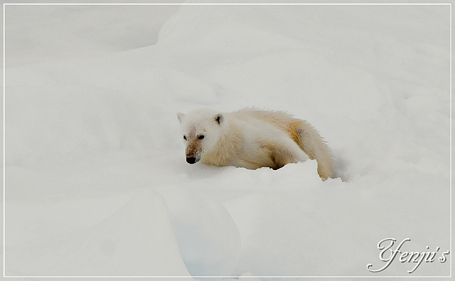 DSC_4708.JPG - 2019北極之旅航程中