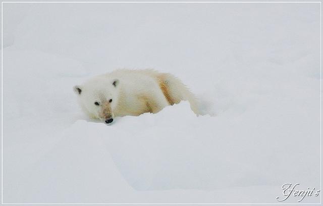 DSC_3486.JPG - 2019北極之旅航程中