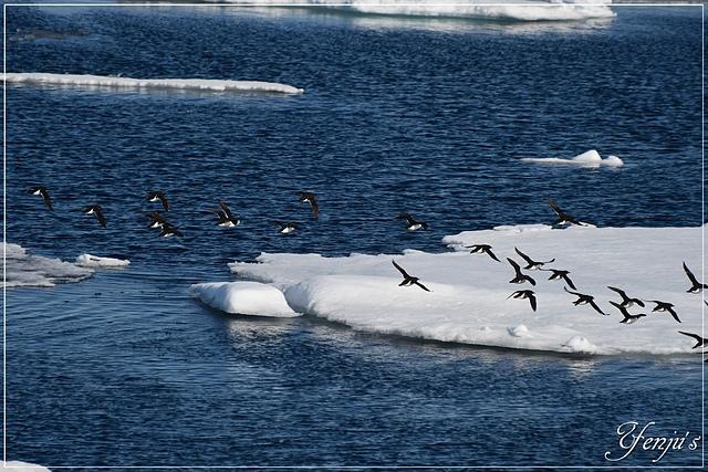 DSC_4237.JPG - 2019北極之旅航程中