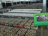 2008-11新社-百菇莊:2008-11-24百菇莊_0002.JPG