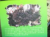 2008-11新社-百菇莊:2008-11-24百菇莊_0004.JPG