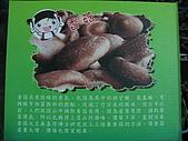 2008-11新社-百菇莊:2008-11-24百菇莊_0010.JPG