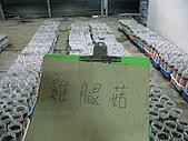 2008-11新社-百菇莊:2008-11-24百菇莊_0016.JPG