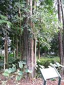六龜-新威森林公園 2009-1-28:2009-1-29新威森林公園_0016.JPG