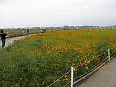 2008-11新社花海節:2008-11-24新社花海0075.JPG