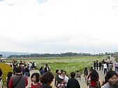 2008-11新社花海節:2008-11-24新社花海0003.JPG