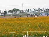 2008-11新社花海節:2008-11-24新社花海0014.JPG