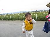 2008-11新社花海節:2008-11-24新社花海0015.JPG