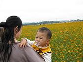 2008-11新社花海節:2008-11-24新社花海0019.JPG