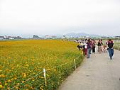 2008-11新社花海節:2008-11-24新社花海0021.JPG