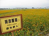 2008-11新社花海節:2008-11-24新社花海0024.JPG