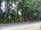 六龜-新威森林公園 2009-1-28:2009-1-29新威森林公園_0003.JPG