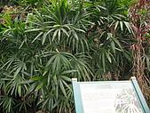 六龜-新威森林公園 2009-1-28:2009-1-29新威森林公園_0023.JPG