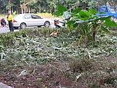 六龜-新威森林公園 2009-1-28:2009-1-29新威森林公園_0004.JPG