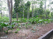 六龜-新威森林公園 2009-1-28:2009-1-29新威森林公園_0005.JPG