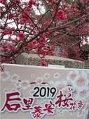 1080222>>泰安櫻花:20190222_062103.jpg
