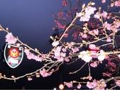 1080222>>泰安櫻花:20190222_060751.jpg