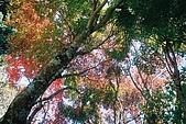 941029-941030>>福壽山&梨山&武陵農場:F1000011