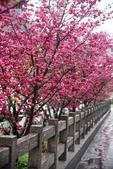 1050309>>就愛賴在中台灣:IMG_7158.JPG
