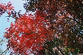 941029-941030>>福壽山&梨山&武陵農場:F1000006