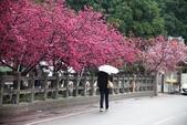 1050309>>就愛賴在中台灣:IMG_7147.JPG