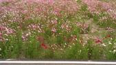 10611**>>苗栗銅鑼九湖杭菊花海:IMAG9415.jpg