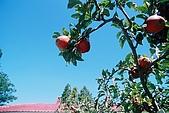 941029-941030>>福壽山&梨山&武陵農場:F1000025