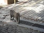 關於一些生活上的細瑣:以下是麗雅拍的中山猴