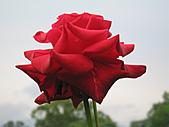 「愛現花遊記」投稿相簿:[klh0307] 玫瑰世界