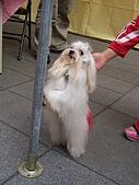 狗狗徵婚派對(20060311):100_0913