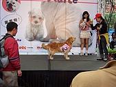 狗狗徵婚派對(20060311):100_0920