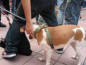 狗狗徵婚派對活動花絮:hinet活動 022