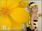 2010『秋日楓菊趣景點大募集!』:[shellon] 熊蜂明信片投稿