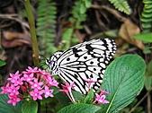 「愛現花遊記」投稿相簿:[nathalie630] 小紅花與蝴蝶