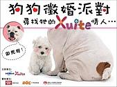 狗狗徵婚派對(20060311):HiNet Xuite狗狗徵婚派對