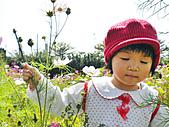 「愛現花遊記」投稿相簿:[ww555g] 在波斯菊花海中沉思的少女