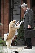 忠犬小八:Hachi_2_0407.jpg