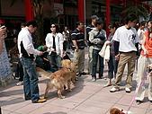 更多狗狗徵婚派對全程實錄:P1000145