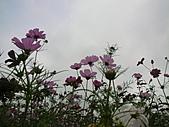 「愛現花遊記」投稿相簿:[nec560819] 私房花現-自然之美