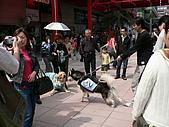 更多狗狗徵婚派對全程實錄:P1000150