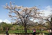 「愛現花遊記」投稿相簿:[skymagic] 櫻花