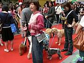 更多狗狗徵婚派對全程實錄:P1000152