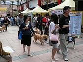 更多狗狗徵婚派對全程實錄:P1000154