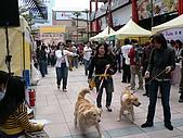 更多狗狗徵婚派對全程實錄:P1000155
