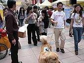 更多狗狗徵婚派對全程實錄:P1000157