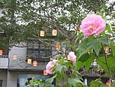 「愛現花遊記」投稿相簿:[tseng.chien] 私房花現-美麗的山牡丹