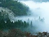 「愛現花遊記」投稿相簿:[tk0404] 發現梅花海與霧海