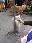 狗狗徵婚派對(20060311):100_0912