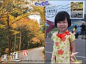 2010『秋日楓菊趣景點大募集!』:[tseng.chien] 天真‧可愛